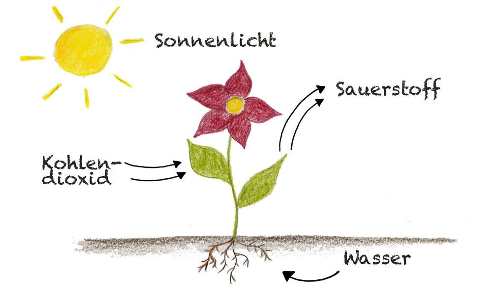 Was Produzieren Pflanzen