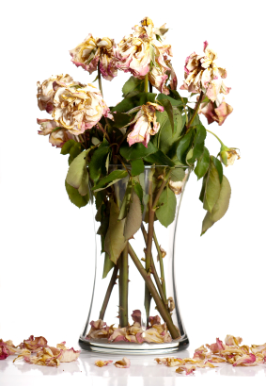 Dried Flowers Represent Yin Energy And Are Not Good Anything Dead