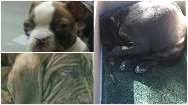 These Are The Photos Petland Doesn T Want You To See Animals Animal Lover Animal Abuse
