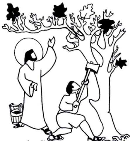 the barren fig tree | Bible: NT Parables of Jesus | Fig tree ...