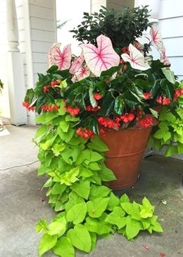 5 of Our Favorite Container Garden Spillers is part of Container gardening flowers, Container flowers, Container gardening, Porch flowers, Garden vines, Container plants - More than the other two elements of a welldesigned mixed container, the thriller and filler, the spiller gives a lush look to your finished planter