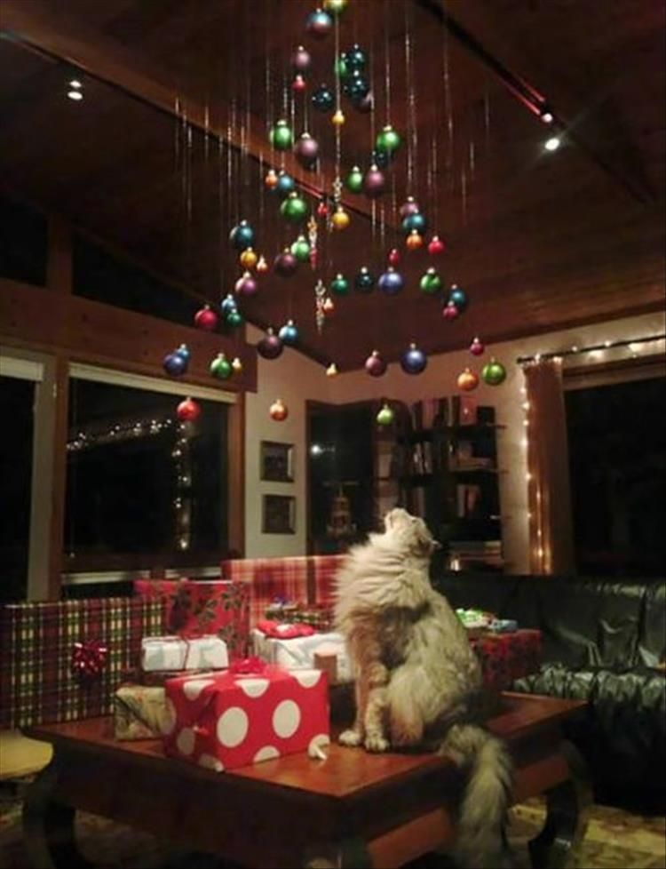 How To Cat Proof Your Christmas Tree.Funny Ways To Pet Proof Your Christmas Tree 21 Pics