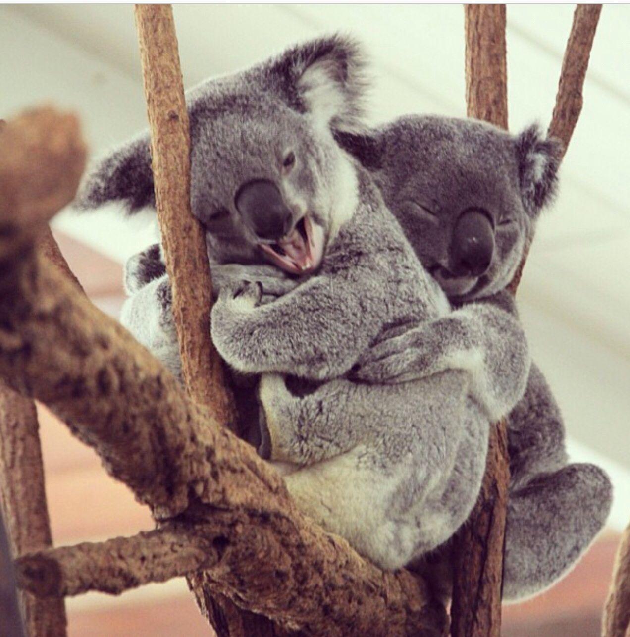 милые картинки обнимашек животных нам долги наши