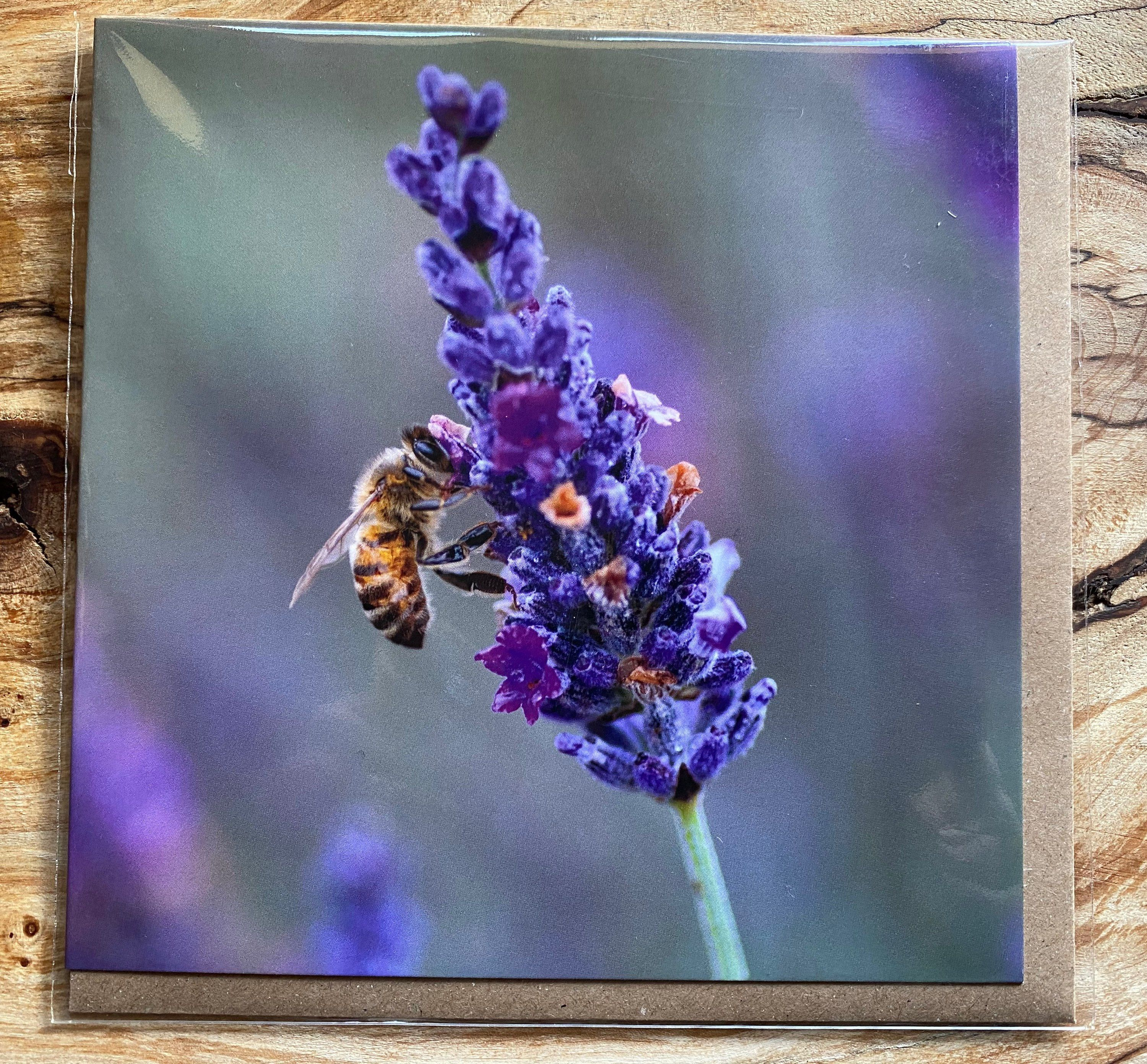 Lavender greeting card card with lavender and bee on