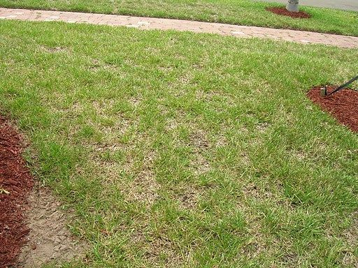 Is Your Lawn Burned Out And Brown Summer Heat Probably Responsible How To Take Care Of Now So It Returns Lush Green
