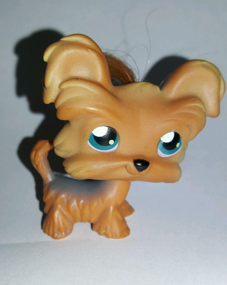 Littlest Pet Shop Dog Yorkie Shih Tzu Hair Blue Eyes 6 Preowned Lps