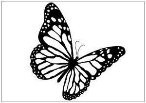 Printable Fun Butterfly Coloring Pages For Kids Butterfly Outline Butterfly Coloring Page Butterfly Drawing