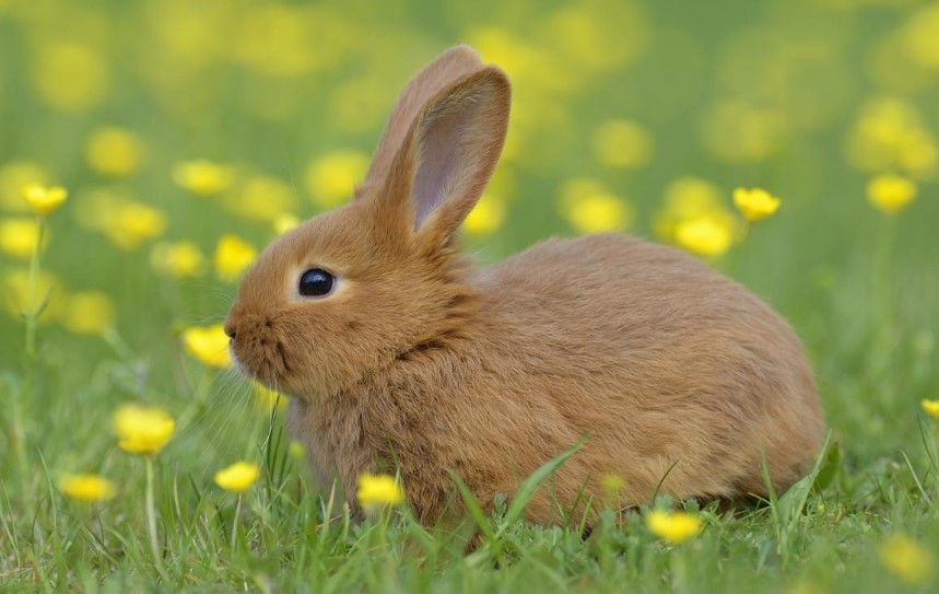 15 Intriguing Animals That Start With The Letter R Animals Female Rabbit Your Spirit Animal