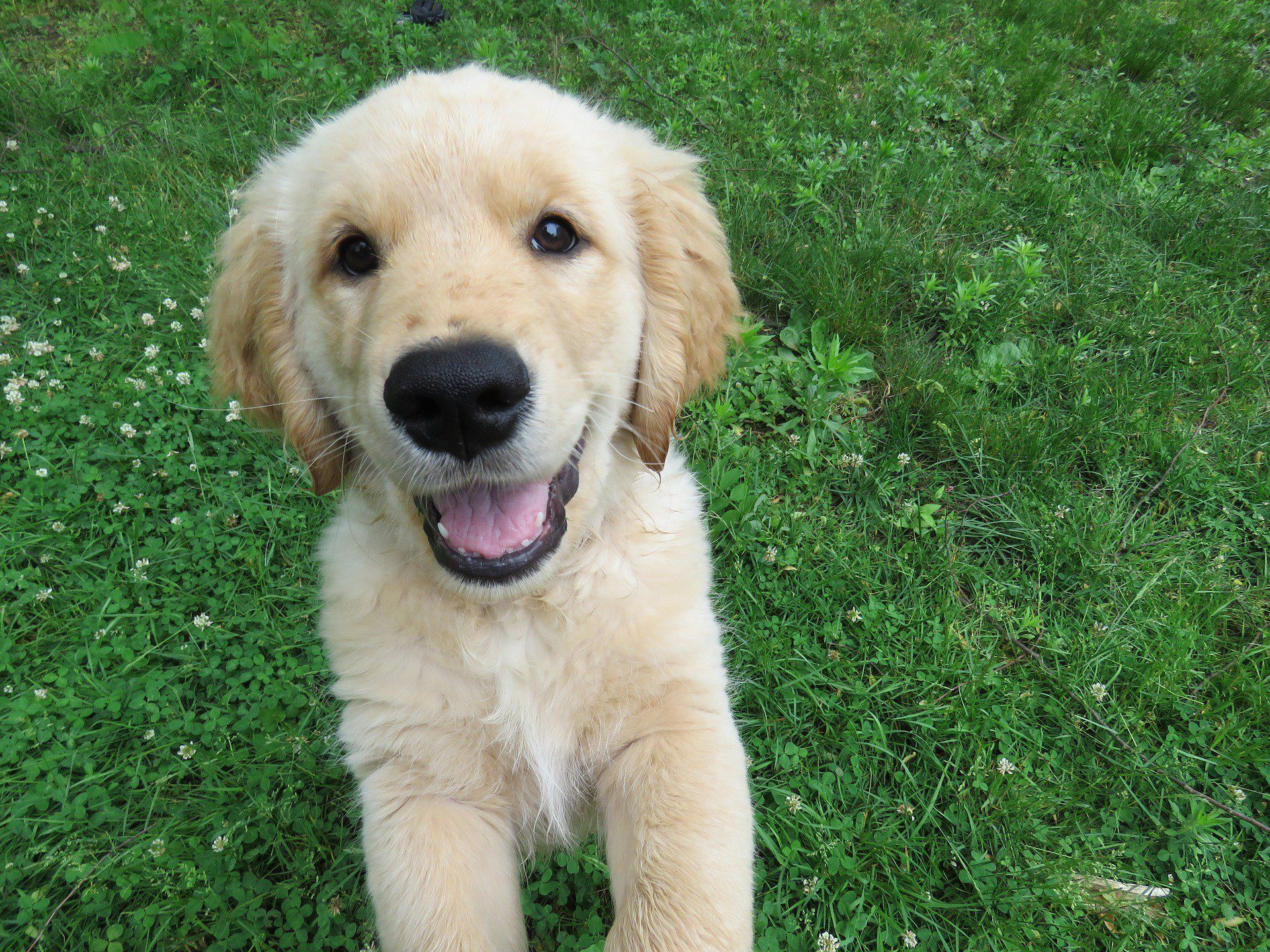The 251 Most Popular Golden Retriever Names Of 2019 Golden