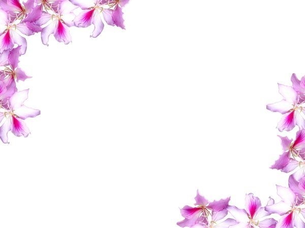 Free Printable Flower Borders And Frames