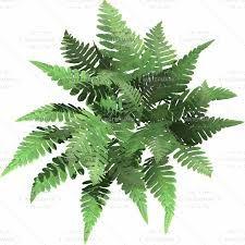 Imagen Relacionada Tree Plan Png Plants Tree Plan