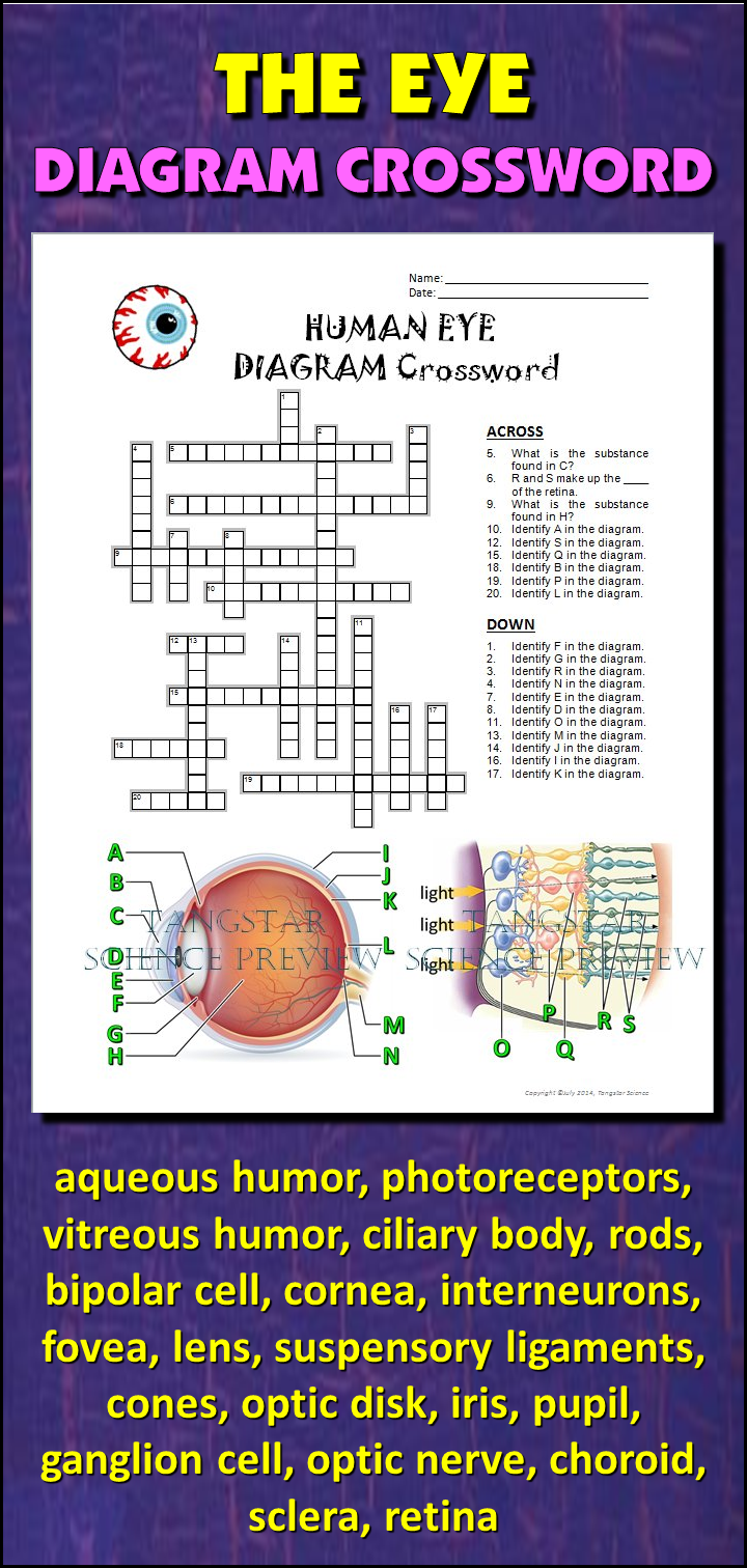 Eye crossword with diagram editable pinterest student learning help students learn and remember the parts of the eye using this diagram crossword bonus activity when theyve completed the crossword get them to cut ccuart Images