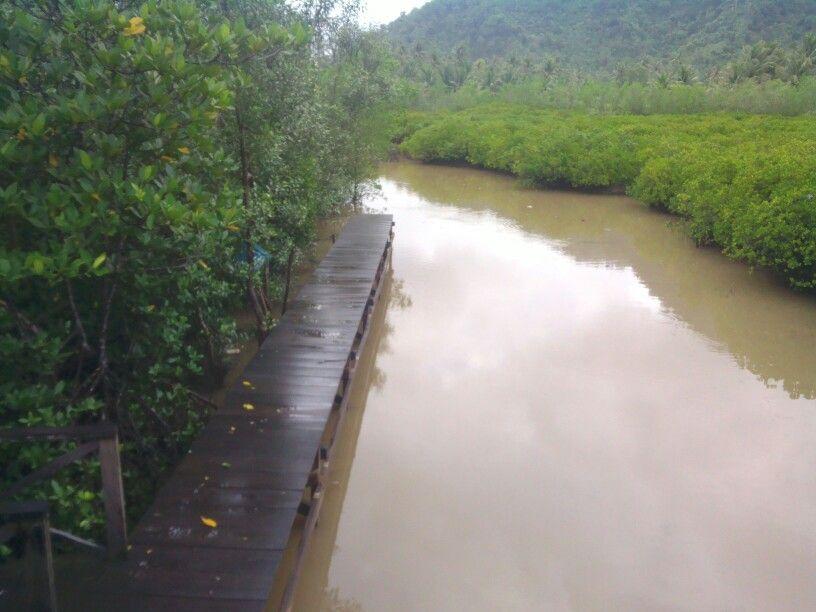 Ekowisata Mangrove Di Trenggalek Jawa Timur Mangrove