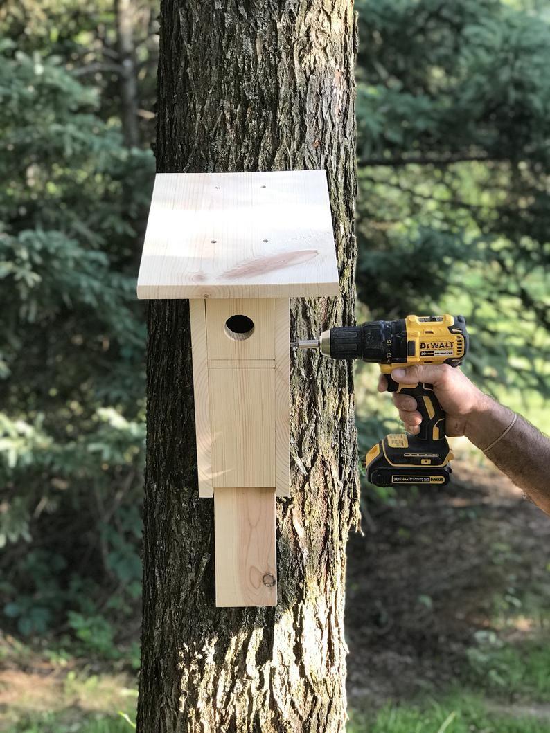 Peterson bluebird buiten birdhouse, bluebird habitat