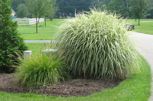 Pin by bertha miller on gardening add some greenery pinterest gardeing with ornamental grass workwithnaturefo