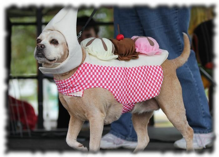 5th Annual Mutt Strut Dog Walk Festival Dog Boutique Mutt Strut Dog Walking