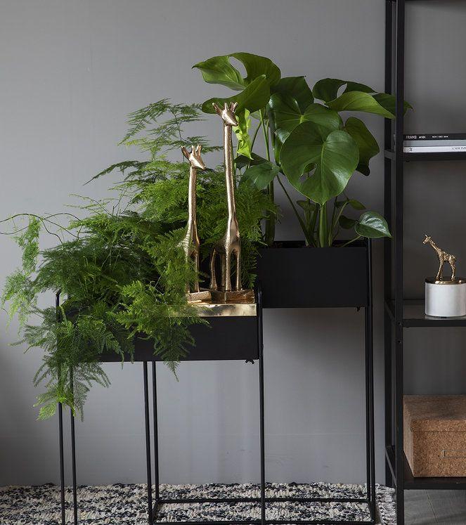 Photo of Skap en grønn oase med trendy plantekasser | Inspirasjon fra Mester Grønn