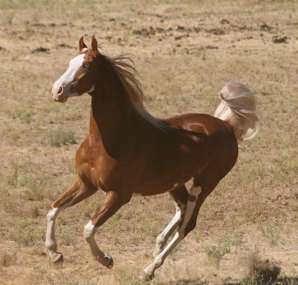 Cowboy Dressage™ at Wolf Creek Ranch  - Langes Cheyenne Gold