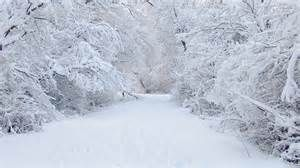 Beauty in Snow - Bing images