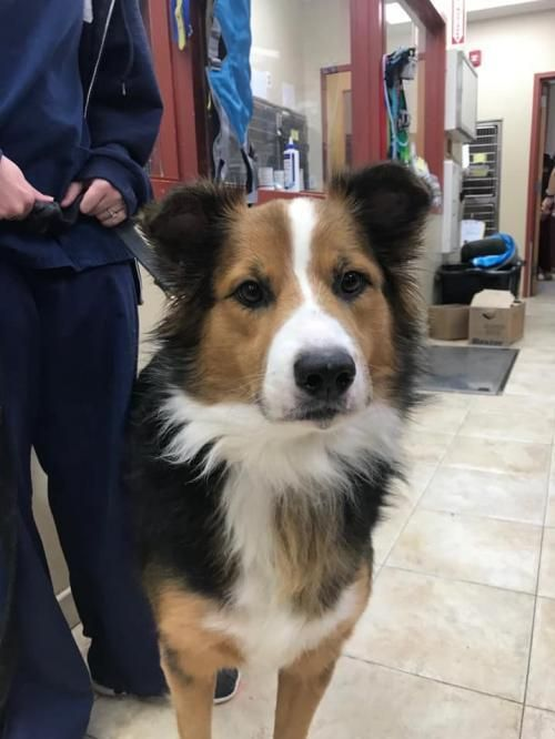 Adopt Jake (TX) on Dogs, Rescue dogs, Collie