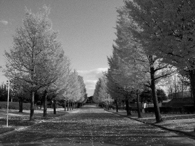 Hokkaido black and white