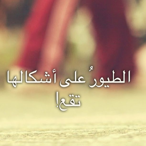 على شكله شكشكله Words Arabic Words Qoutes