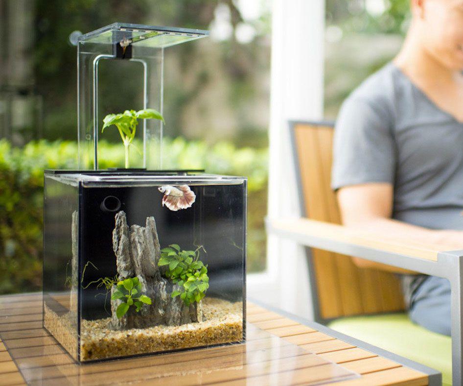 Ecoqube C Aquarium Cleaning Fish Self Cleaning Fish Tank Aquaponics Fish
