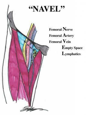 femoral triangle | Anatomie