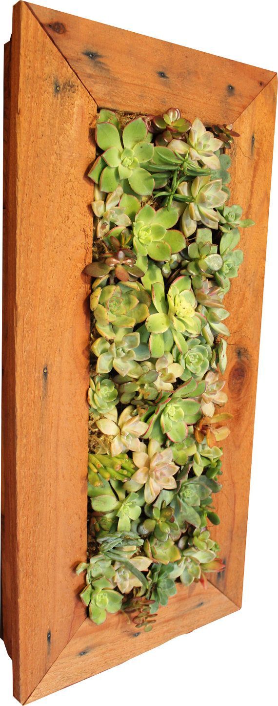 1\' x 2\' Indoor/Outdoor Living wall. 100% Handmade Redwood Vertical ...