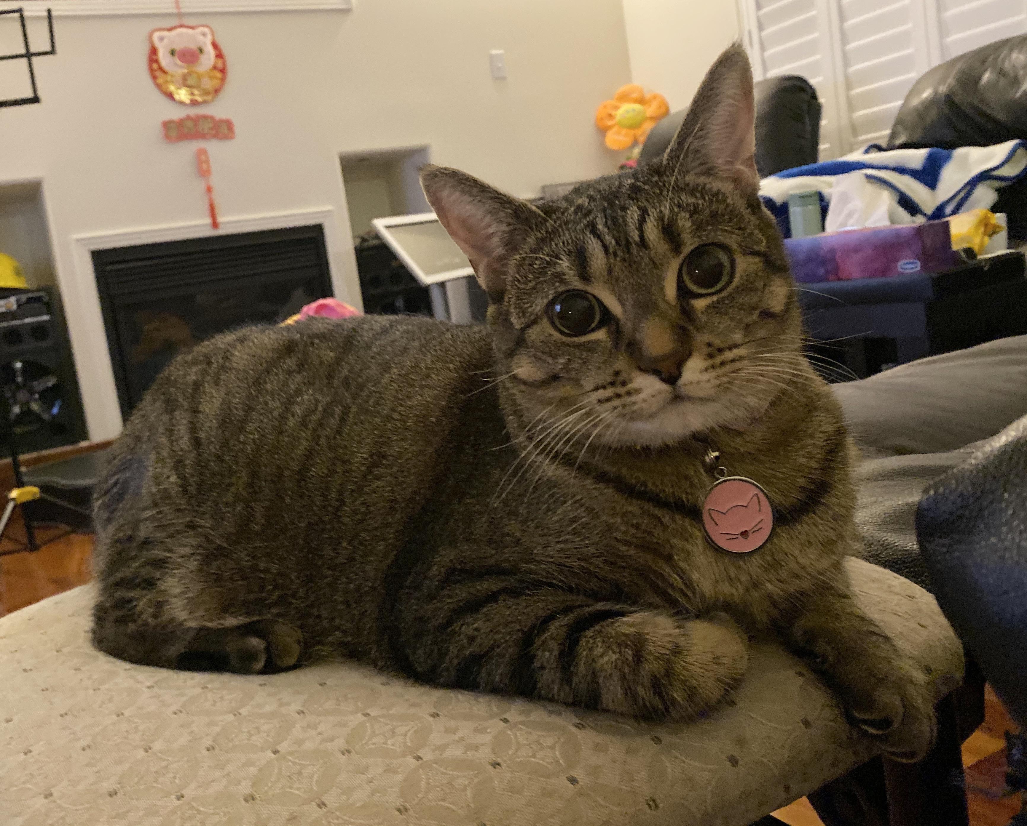 Arias a comfy cutie kitty https//ift.tt/2LVHvfl Cat