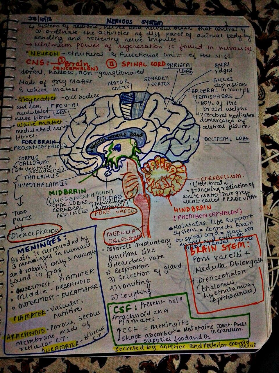 Study tips: Make visual notes to add fun to studying.. Writing in a ...