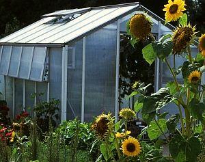 Kleingewächshaus im Garten, in welchem Monat ist was zutun?