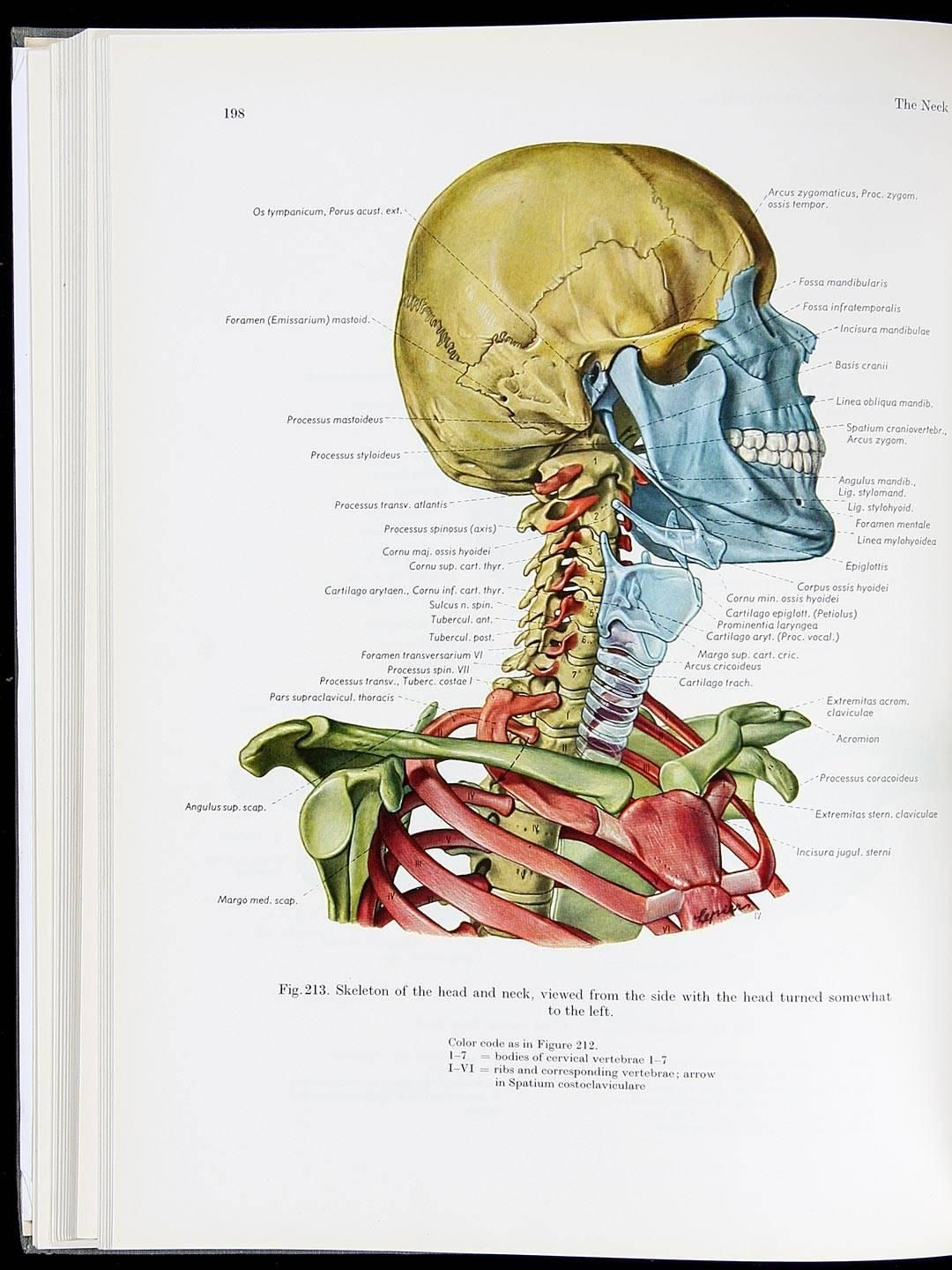 Atlas Of Topographical And Applied Human Anatomy Price Estimate
