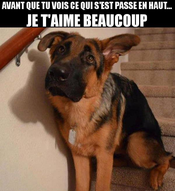 Chien betise | Image drole animaux, Humour chiens