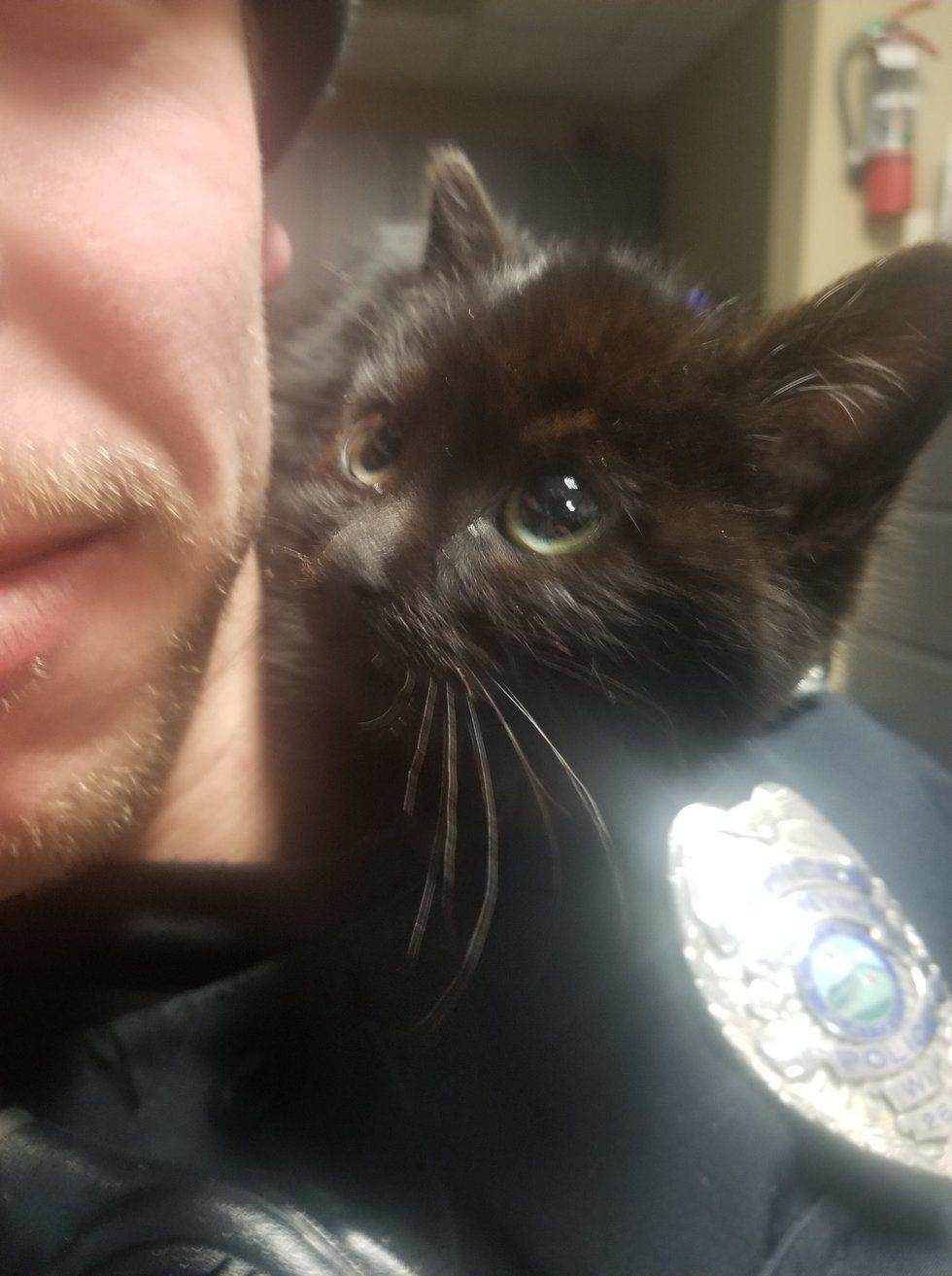 Officer Saves Kitten Stuck In Snow The Kitty Climbs Onto Him And Insists On Going Home With Him Love Meow Kitten Rescue Kitten Kitten Adoption