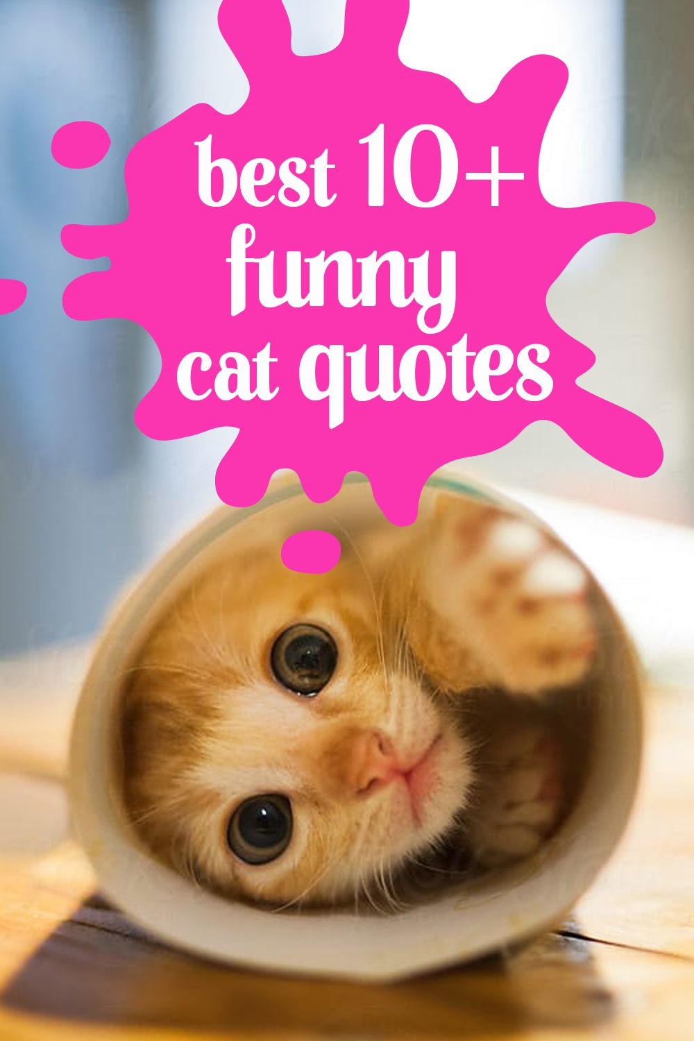 Best 10 Funny Cat Quotes Cat Quotes Funny Cat Quotes Funny Cats
