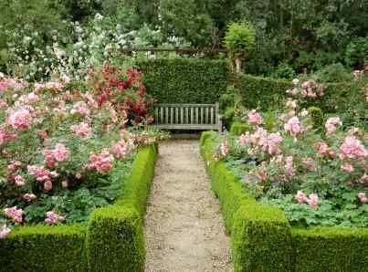 fancy planning rose garden