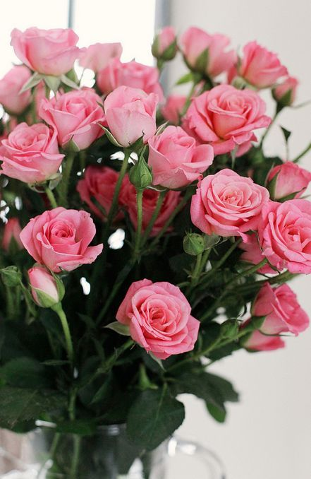 Bouquet Of Pink Roses For Valentines Day