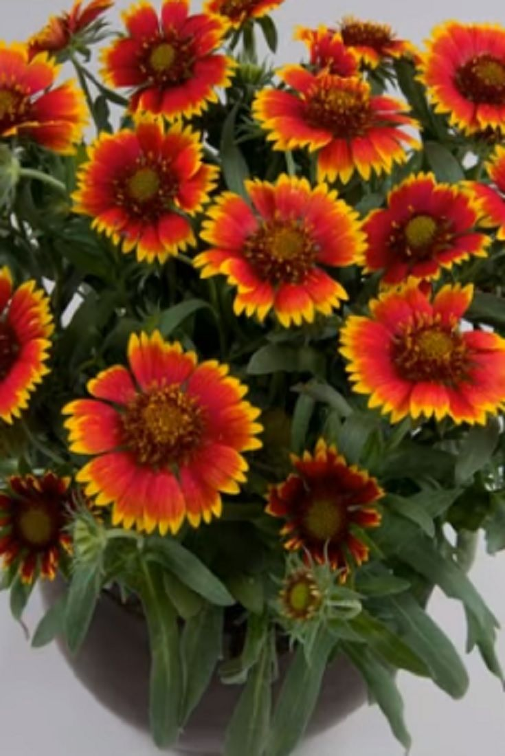 15 beautiful plants that bloom all summer long video beautiful 15 beautiful plants that bloom all summer long video beautiful plants izmirmasajfo