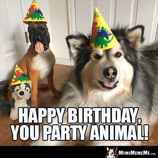 Dog Birthday Meme Happy Birthday You Party Animal Happy Birthday Dog Dog Memes Happy Dogs