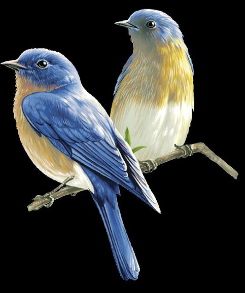 Pin De Blanka Dolinar Em Png: Pin De Eliane Carneiro Em Borboletas E Pássaros