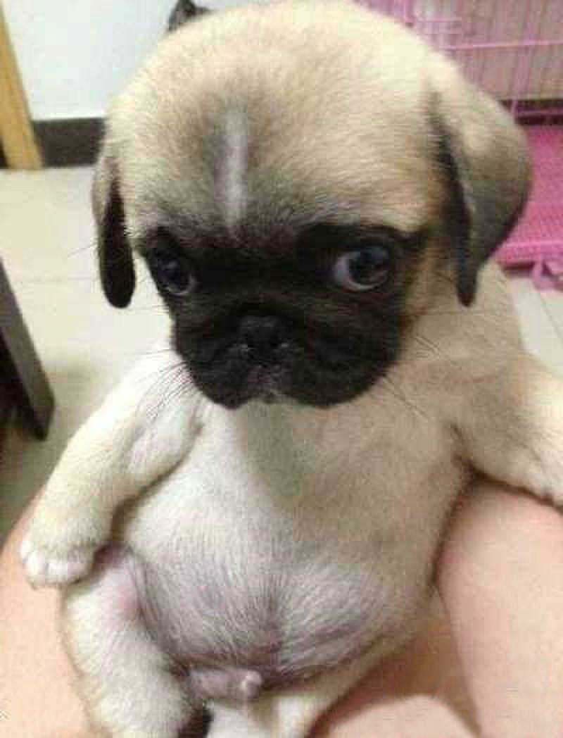 1000 Images About Adorable Animals On Pinterest Puppys Holding