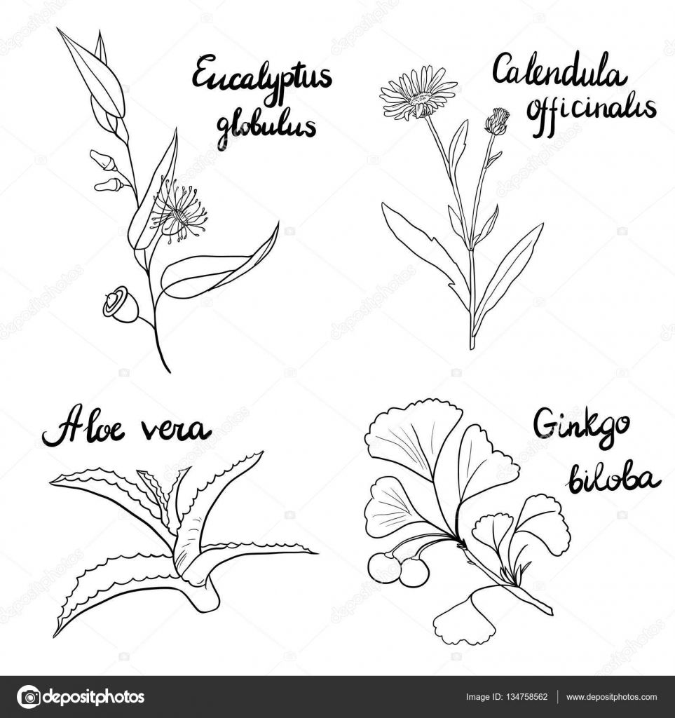Descargar Vector Conjunto De Plantas Medicinales Ilustracion De Stock Plantas Medicinales Dibujos De Plantas Medicinales Plantas