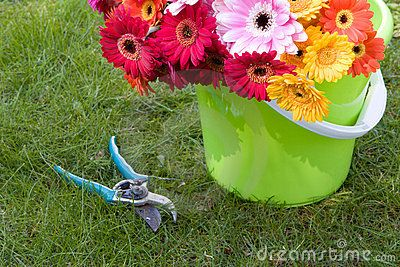 Daisies in a sand pail for beach party