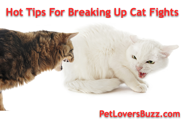Hot Tips For Breaking Up Cat Fights Cats, Baby cats, Cat