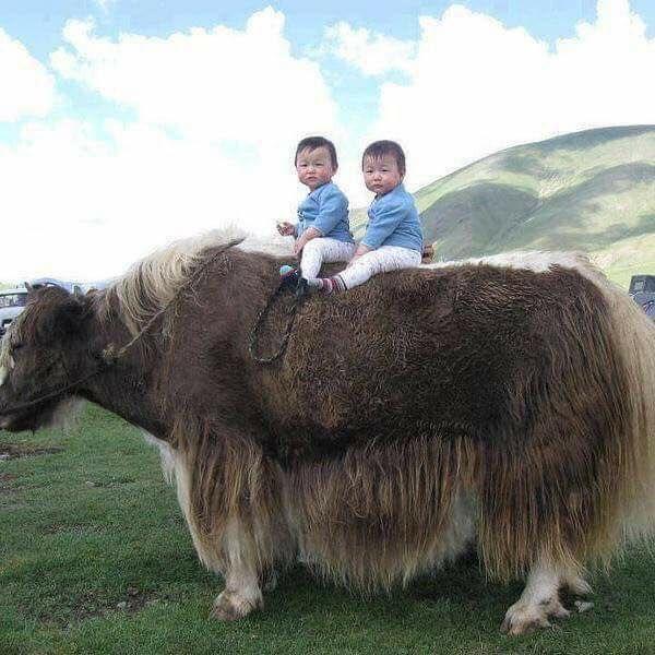 Монголия картинки прикольные, летием