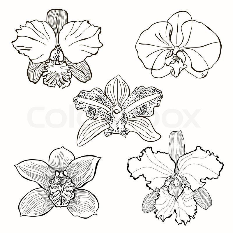 8238914 Hand Drawn Orchid Flowers Vector Set Jpg 800 800 Orchid Drawing Flower Sketches Flower Drawing
