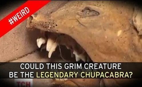 Chupacabra Mumificado encontrado na Ucrânia?