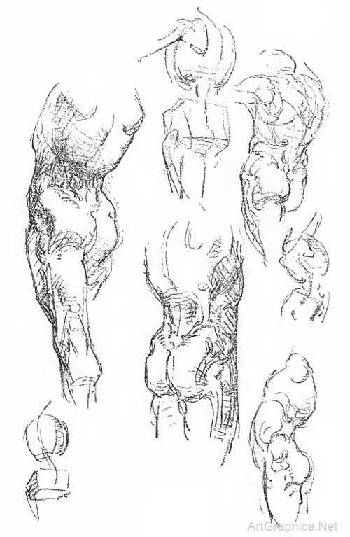 anatomy art book, free books online | Anatomy studies | Pinterest ...