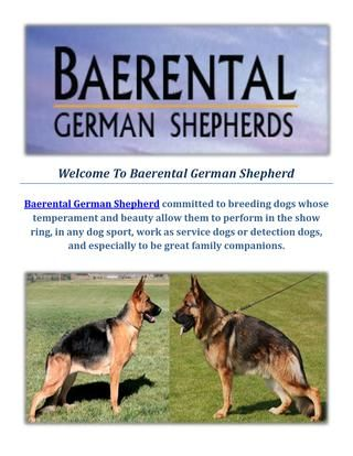 Baerental German Shepherd Puppies For Sale In Massachusetts Puppies For Sale German Shepherd Puppies Detection Dogs